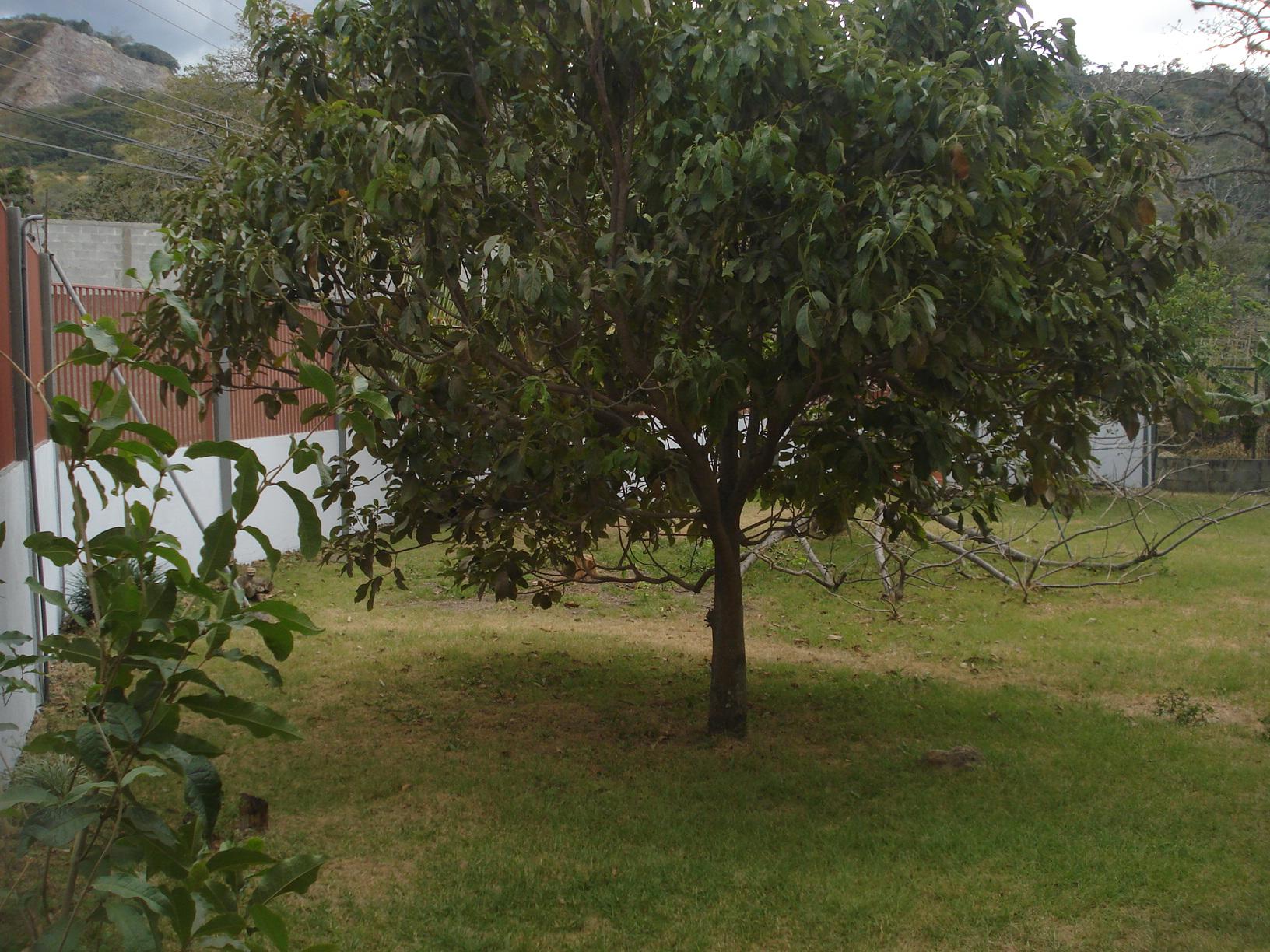Casas En Venta En Santa Ana Inmotico | Car Release Date